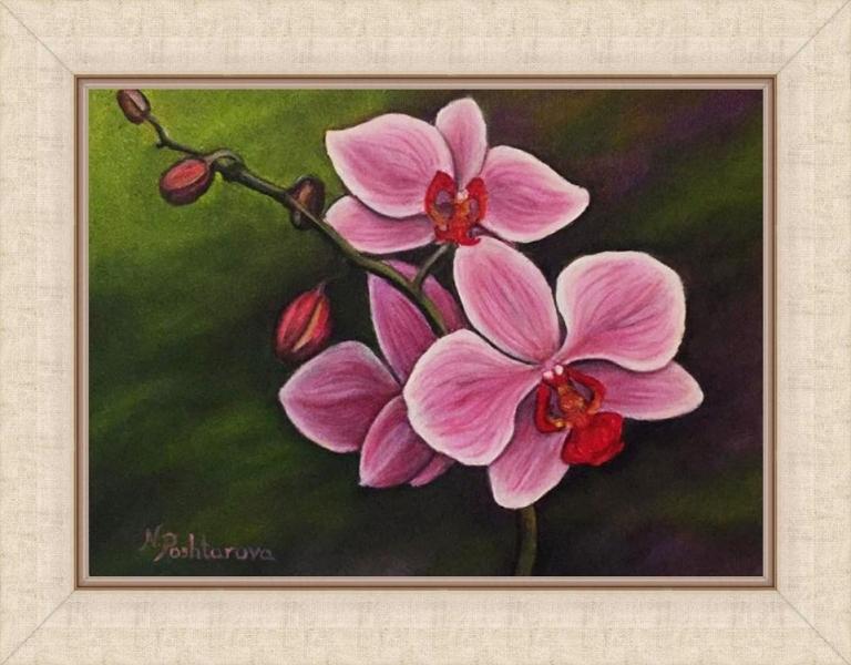 orchid_s_ramka